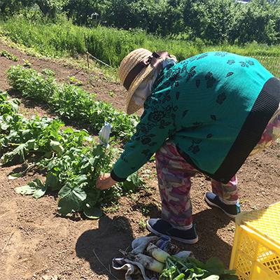 リハビリにて農作業